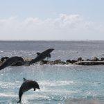 Delfine im Sea-Aquarium