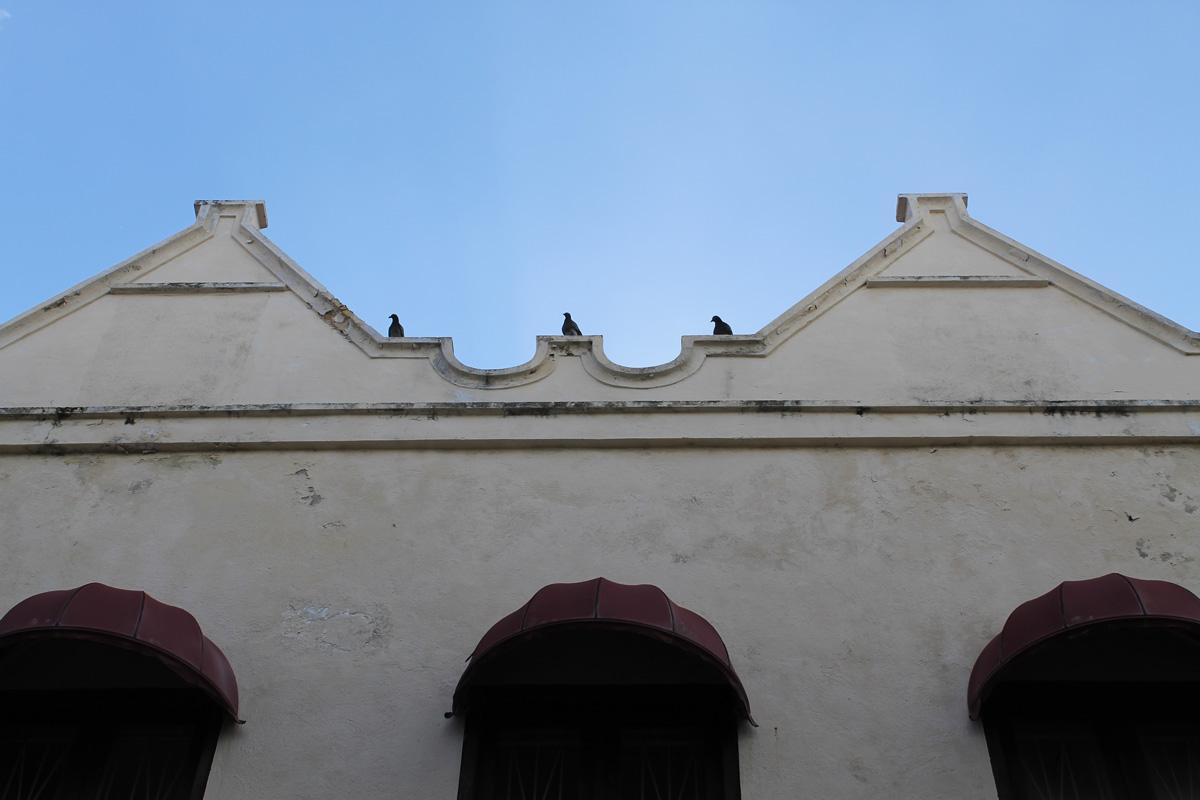 3 Tauben 3 Fenster