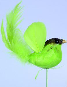 Vogel zur Freistellungsübung mit Photoshop